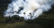 Illustration : Incendies en amazonie