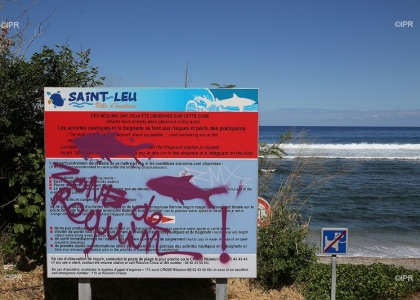 Illustration : Un requin bouledogue capturé à Saint-Leu