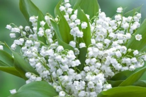 "Illustration : Le muguet, un traditionnel ""porte-bonheur"""