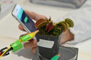 "Illustration : ""Robots-plantes"": des scientifiques cherchent à combiner technologie et nature"